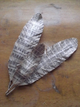 paper feather tutorial1