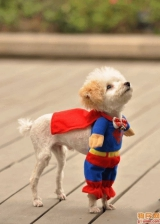 puppy superhero