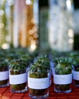 succulant wedding favors, outdoor wedding inspiration, private estate wedding, pacific palisades cal