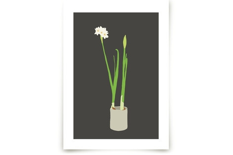Paperwhites Art Prints